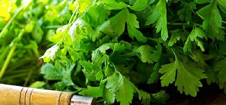 зеленые пряные травы