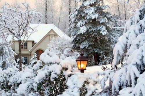дизайн зимнего сада